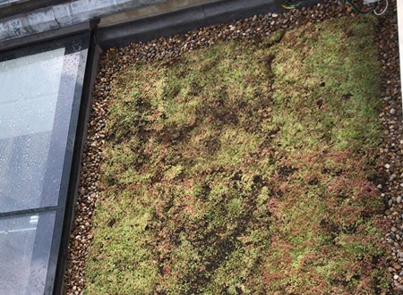 Eco-friendly green roofing Specialists in London