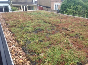 Green roofs in London